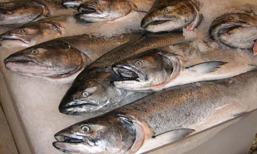 Wild-caught cold water fish and fish oils